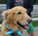 Wilkes Therapy Dog, Ace!